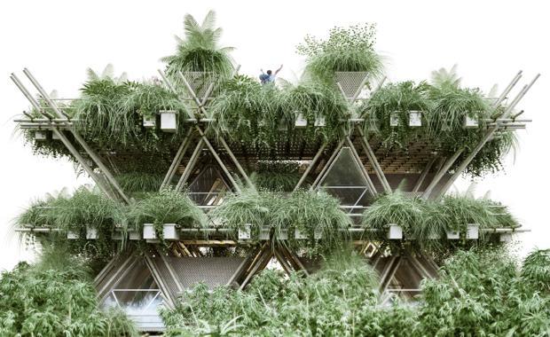 151102-bamboo-1_620x380
