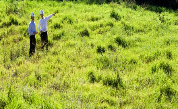 160223-grassy-land_620x380