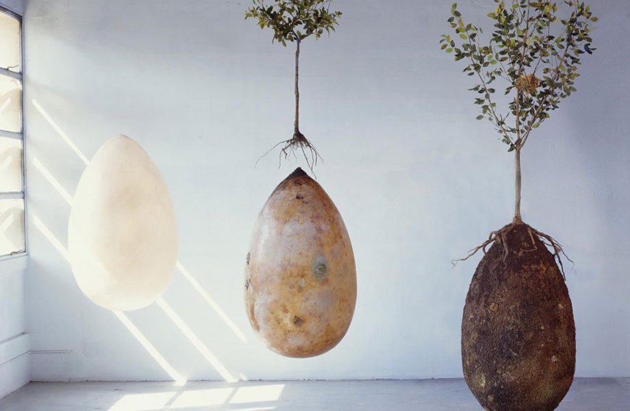 Ashes will be held in small egg-shaped urns while bodies will be laid down in a foetal position in larger pods.