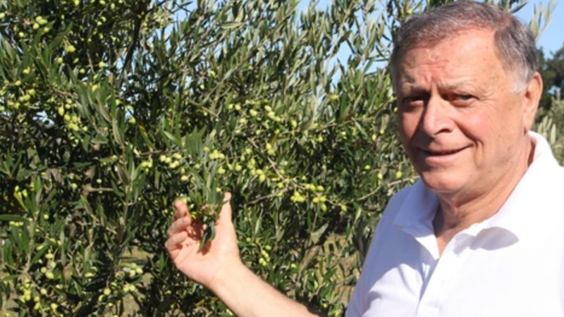 ▲ Tarascio says his grandfather, an olive oil processor in their Sicilian town of Vizzini, would be proud of his latest hobby, producing Taralinga olive oil.