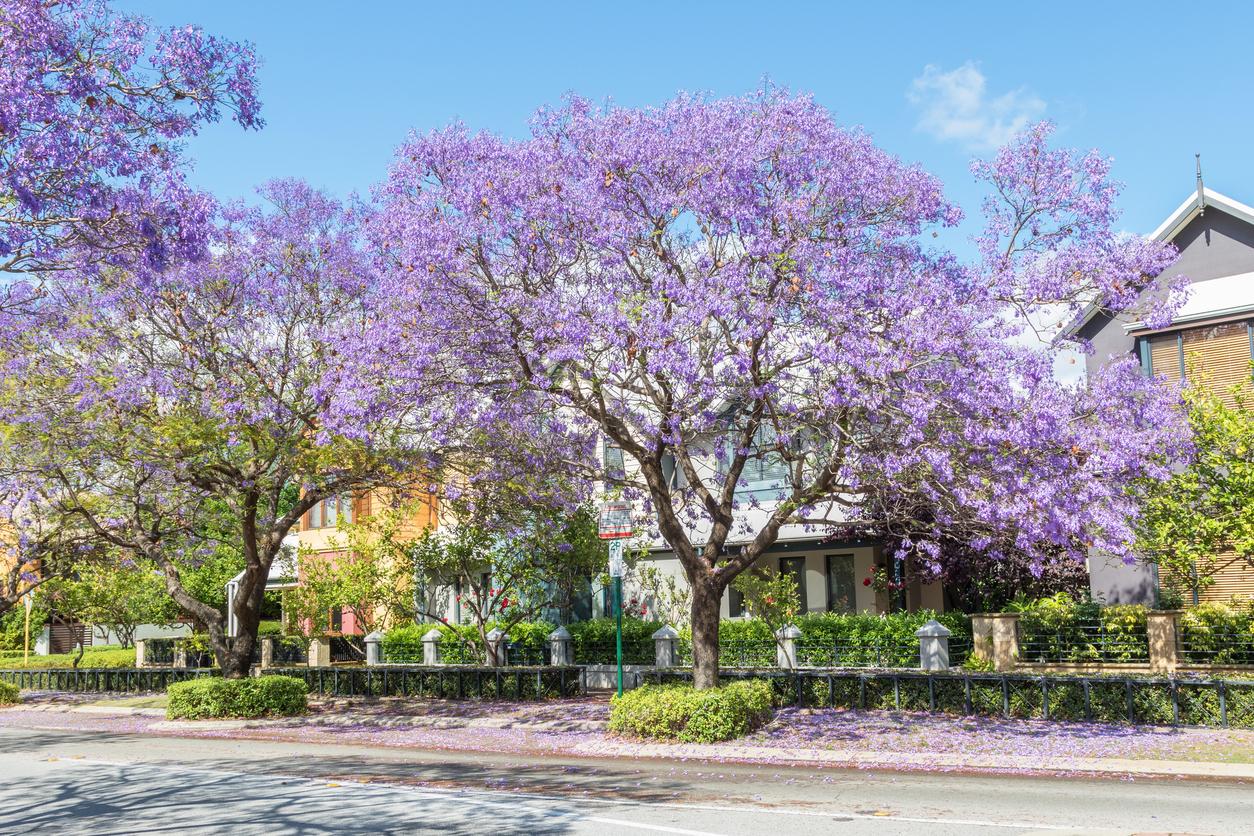Perth Housing1