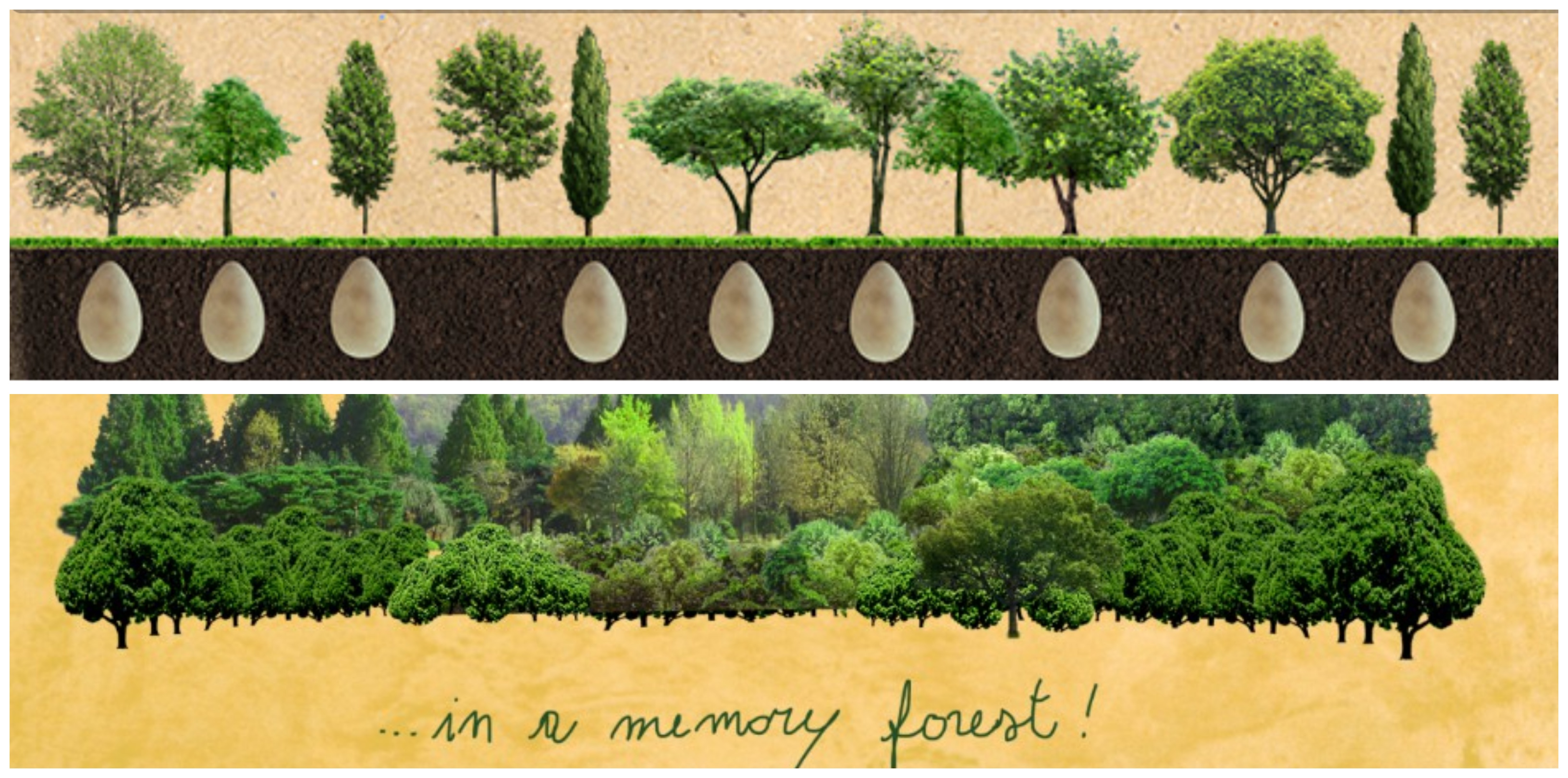A tree takes between 10 and 40 years to reach maturity, while the coffin is generally of use for three days.