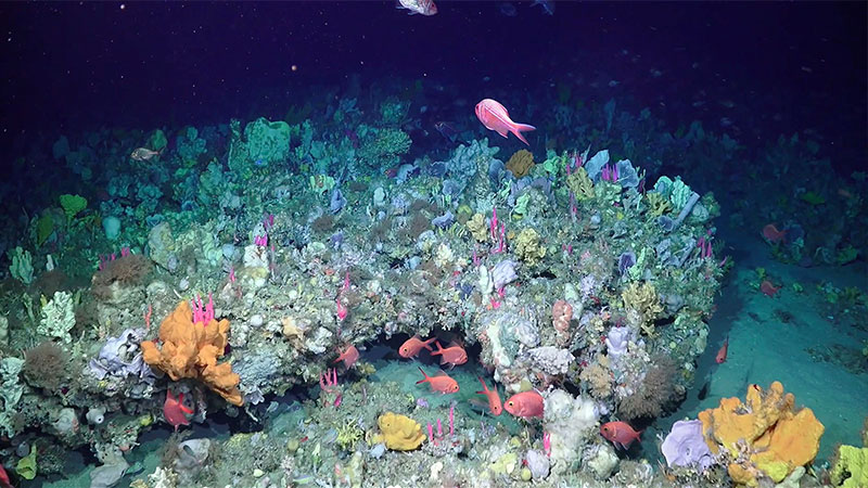 ▲ Scientists used a robot called SuBastian to film and map underwater. Image: Schmidt Ocean Institute