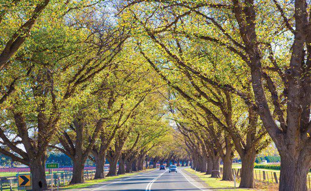 Avenue-of-Honour_620x380