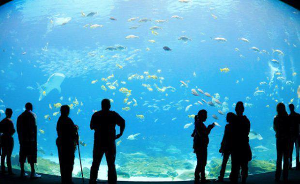 Cairns-aqarium