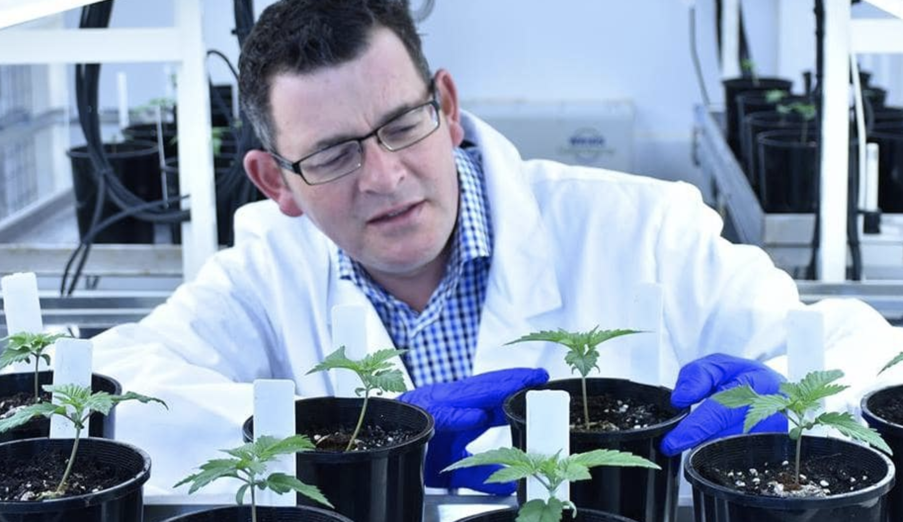 The Victorian government has set the ambitious goal for Victoria to supply half of Australia's medicinal cannabis by 2028.