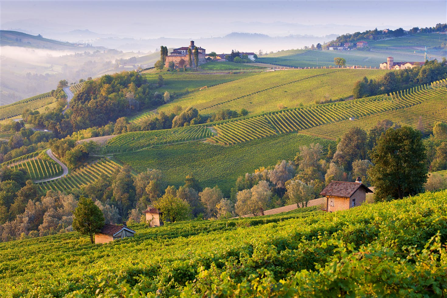 The the vineyard trails of the Langhe region, Piedmont, Italy.