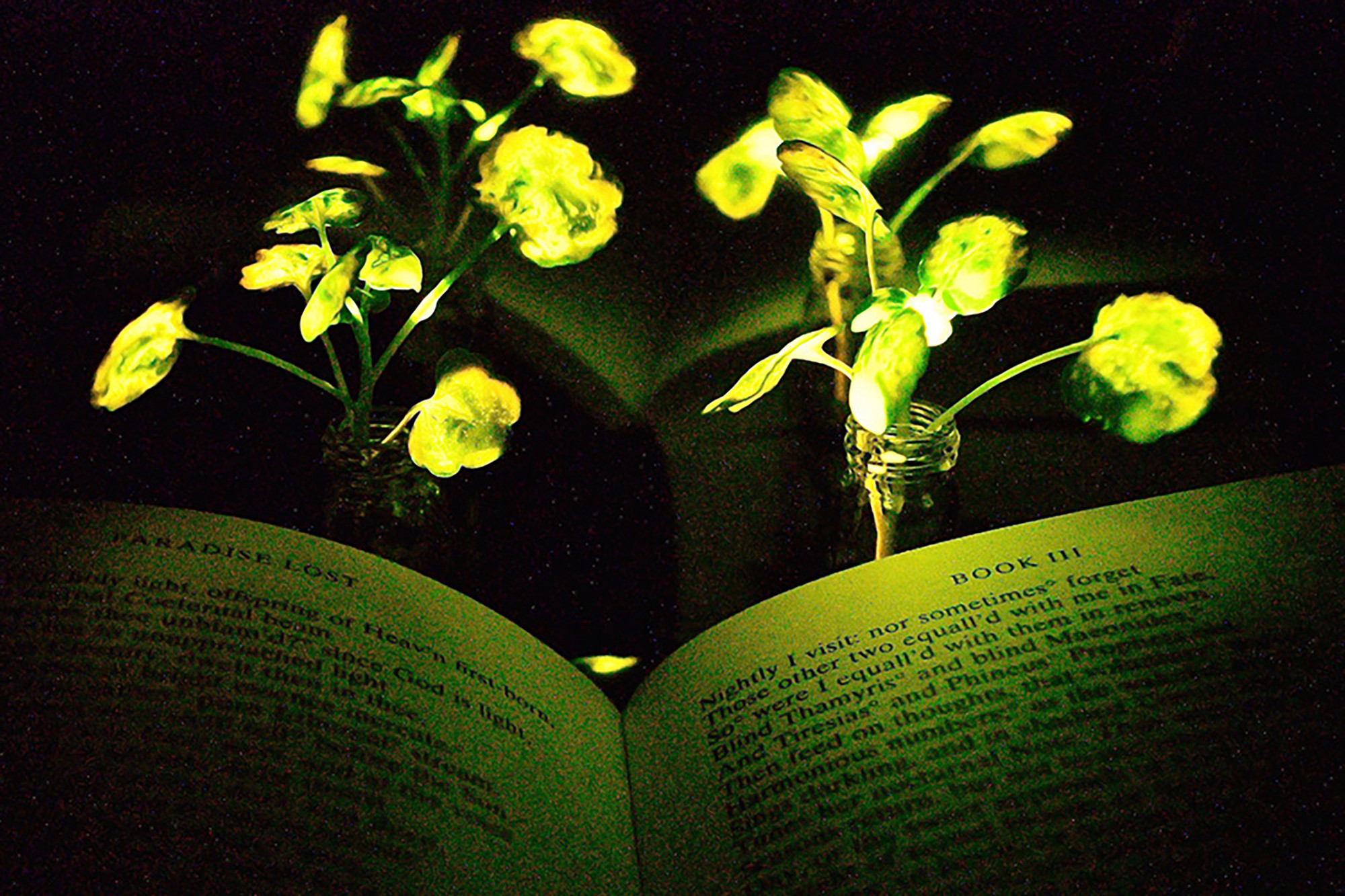 glowing plants 1