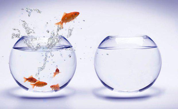 fish-migration_620x380